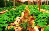 El cultivo bajo  invernadero ofrece ventajas al productor que siga las recomendaciones.