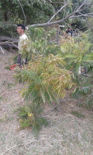El joven falleció luego de que esta rama cayera sobre el tendido eléctrico, ya que una descarga eléctrica lo alcanzó.