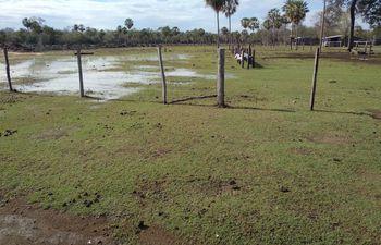 Lluvias benefician a campos ganaderos en Alto Paraguay