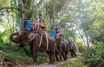 Elefantes en Bali.