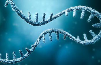 Cadena de ARN mensajero