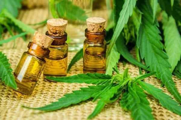 Actualmente 12 empresas cuentan con las licencias para producir el aceite medicinal.