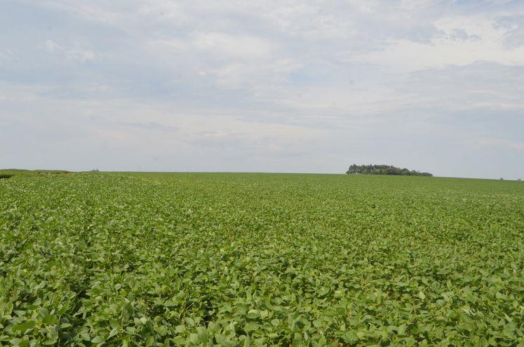 En la Región Occidental o Chaco, las informaciones técnicas/científicas respecto a lo que está sucediendo con los suelos y el manejo de los AVCC son muy escasas.