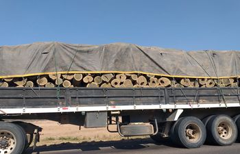 El palo santo se extrae casi sin control del Chaco paraguayo. Este camión fue detenido en un control, pero como no hay forma de saber cuántas veces se utilizó la guía forestal, liberan la carga.