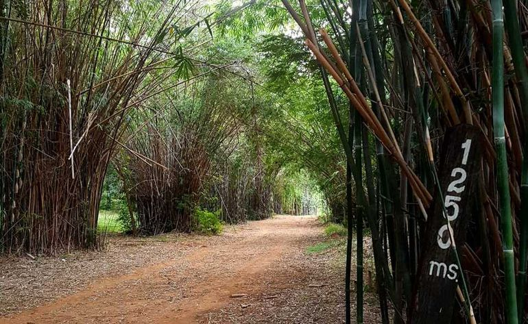 Circuito de ejercicios en zona del Jardín Botánico conocido como tacuaral, donde una mujer denunció ser víctima de asalto y violación.