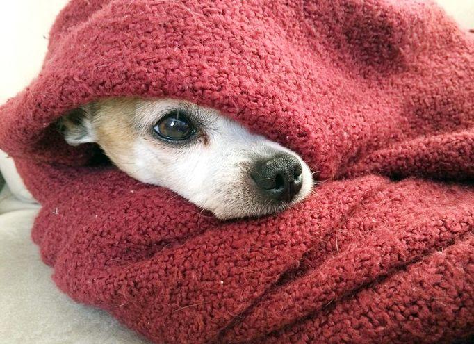 El cambio de temperatura puede agravar los síntomas, por ejemplo si nuestra mascota padece de inflamación en las articulaciones, evitar que se enfríe, especialmente por las noches, pues es cuando más horas pasa inactivo. Foto: Pixabay.