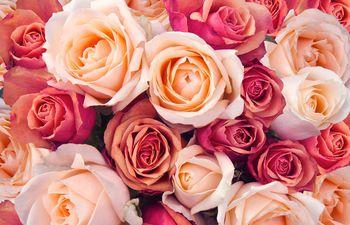 La primavera renueva la oferta y oportunidad de disfrutar de hermosas flores.
