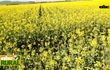 Abc Rural: Uso de la homeopatía en agricultura extensiva