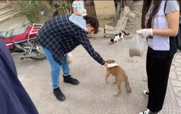 Voluntarios aprovechan el Ramadan para una campaña para asistir a los animales callejeros.
