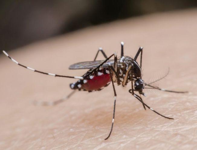 El dengue es endémico en el país,  por lo cual la única forma de combatirlo es eliminando criaderos del Aedes aegypti.