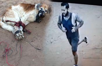 Según el director nacional de Defensa y Salud Animal, este joven sería el que presuntamente arrojó al perro al patio baldío. La Fiscalía deberá corroborar las imágenes del circuito cerrado para confirmar el dato.