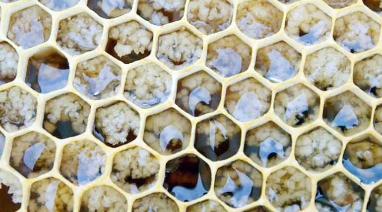 Miel cristalizada dentro del panal; esto rompe el mito de que la cristalización es adulteración.